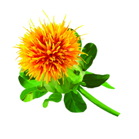 Suncare Ingredient Image: Organic Cartamus Tinctorius (Safflower) Seed Oil